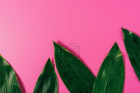 Photo pour Vue de dessus des gouttes d'eau sur les feuilles vertes sur fond rose - image libre de droit