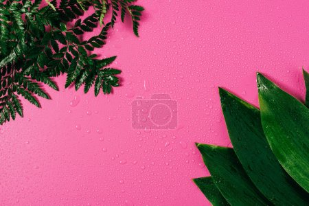 top view of water drops on arranged green leaves on pink backdrop