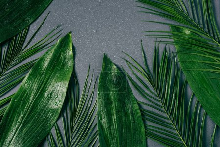 Photo for Flat lay with assorted green foliage with water drops on grey backdrop - Royalty Free Image