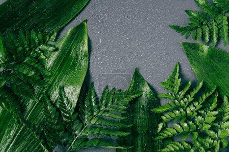 flache Lage mit verschiedenem grünen Laub mit Wassertropfen auf grauem Hintergrund