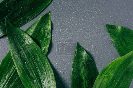 Photo for Flat lay with arranged green foliage with water drops on grey backdrop - Royalty Free Image
