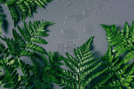 flat lay with arrangement of green fern plants with water drops on grey backdrop