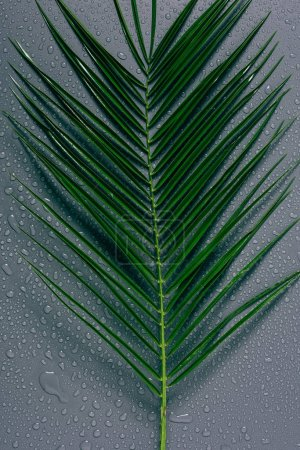 top view of green palm leaf with water drops on grey background