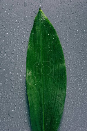 top view of green leaf with water drops on grey background