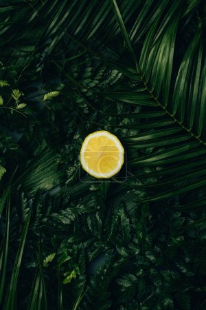 Photo pour Vue de dessus de tranche de citron juteux sur palm vert feuilles - image libre de droit