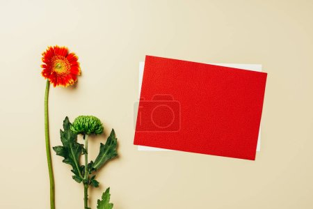 flat lay with arrangement of red and white blank cards, beautiful gerbera and chrysanthemum flowers on beige backdrop
