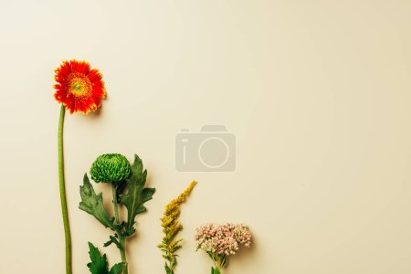 top view of beautiful wildflowers arranged on beige background