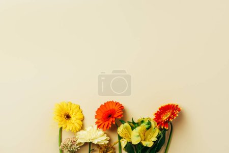 flat lay with beautiful gerbera and lily flowers arrangement on beige backdrop