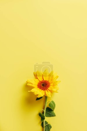 top view of beautiful sunflower on yellow background
