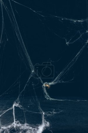 scary halloween background with white web and spider