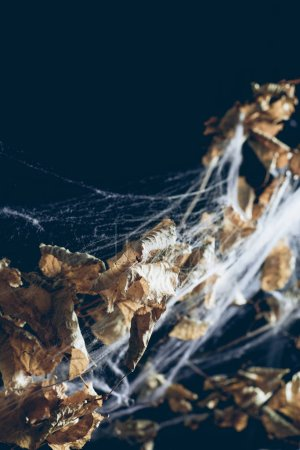 dry branch with leaves in spider web in darkness, halloween background
