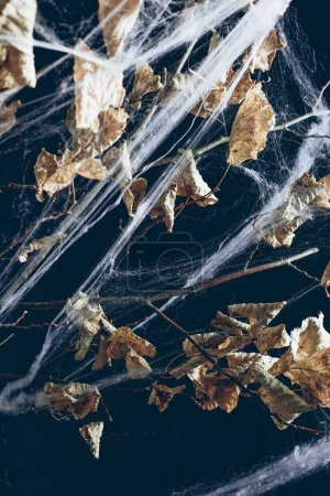 dry branch with leaves in spider web on black, halloween decor