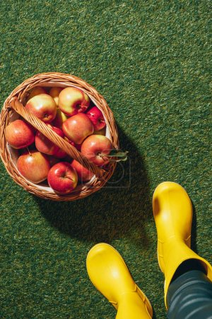 person in rubber boots standing near wicker basket with red apples