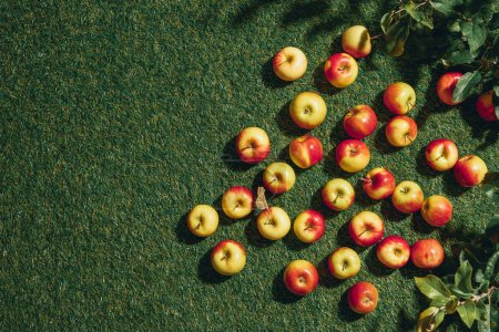Photo for Top view of organic apples on green grass - Royalty Free Image