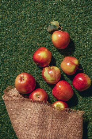 top view of red apples with sacking cloth on green grass