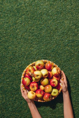 Photo for Cropped view of woman holding wooden bowl with apples on green grass background - Royalty Free Image