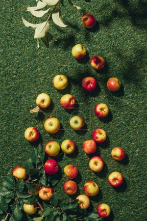 Top view of different apples and apple tree leaves on green grass
