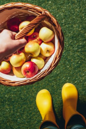cropped view of person in yellow rubber boots holding wicker basket with apples