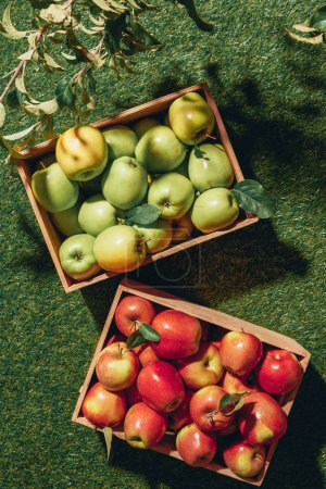 Photo for Top view of green and red apples in wooden boxes with apple tree leaves - Royalty Free Image