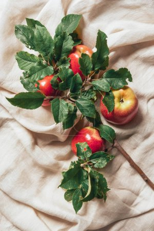 top view of red apples and apple tree leaves on sacking cloth