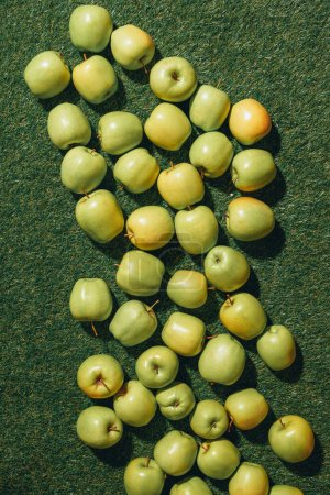 Photo for Top view of green apples on grass background - Royalty Free Image
