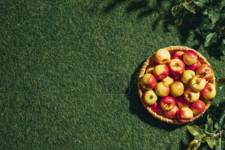 Photo for Fresh apples in wicker basket with apple tree leaves on grass background - Royalty Free Image