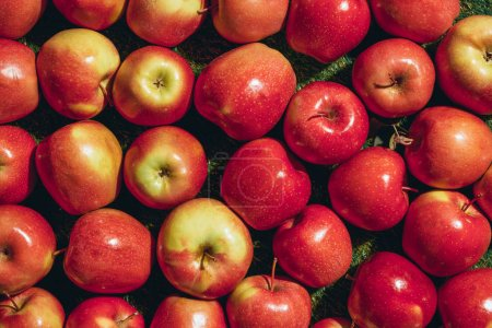 Photo for Top view of different apples on green grass background - Royalty Free Image