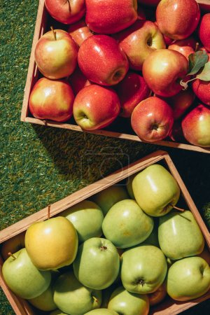 Photo for Top view of red and green apples in wooden boxes - Royalty Free Image