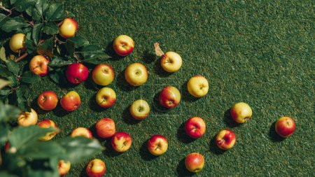 top view of apples and apple tree leaves on green grass