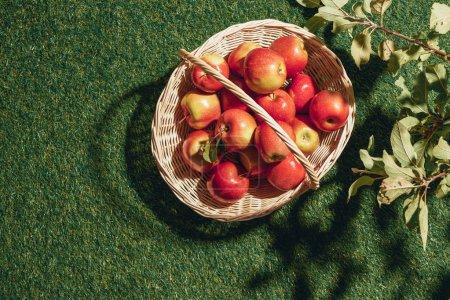 red tasty apples in wicker basket with apple tree leaves