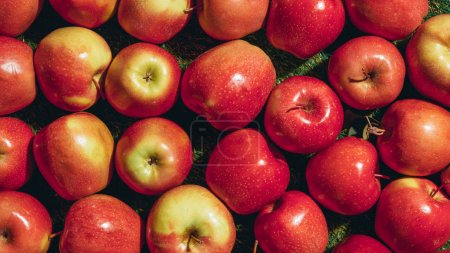 Photo for Top view of red apples on green grass - Royalty Free Image