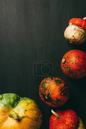 top view of autumnal pumpkins on dark background with copy space