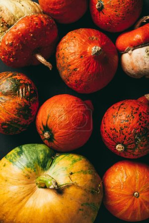 top view of background with colorful organic pumpkins