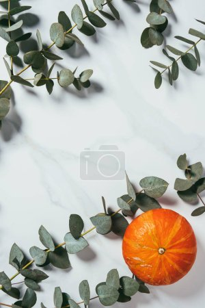 top view of eucalyptus leaves and one pumpkin on white background with copy space
