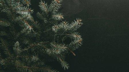 Photo pour Branches de sapin vert sur fond foncé - image libre de droit