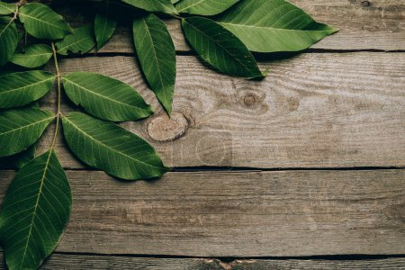top view of beautiful green walnut leaves on wooden table