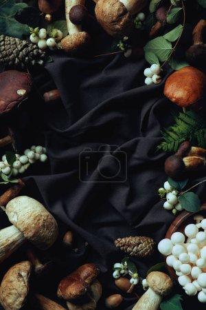 top view of various raw edible mushrooms on black fabric