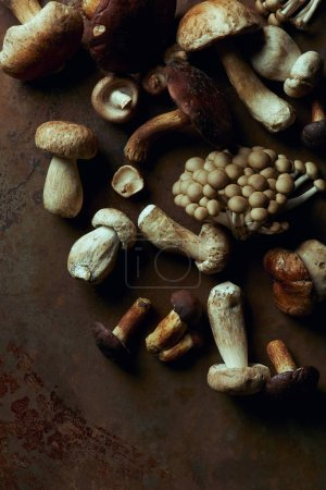 top view of various raw edible mushrooms on dark grunge background