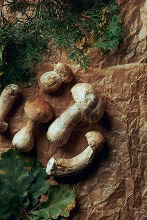 top view of fresh boletus edulis mushrooms and green leaves