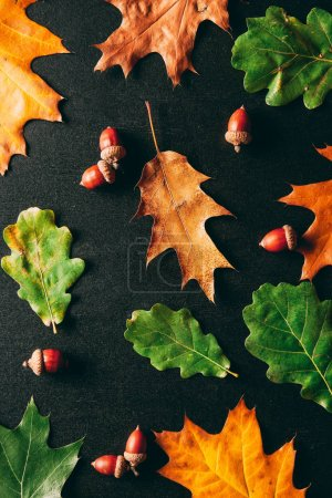 full frame of acorns and oak leaves on black background