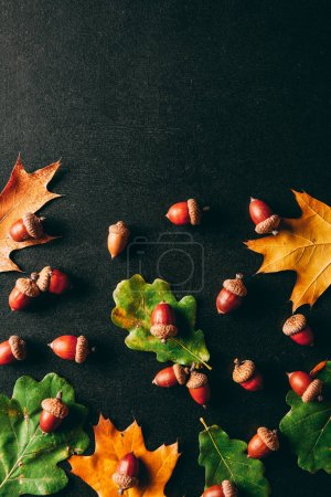 Photo for Full frame of acorns and oak leaves on black background - Royalty Free Image