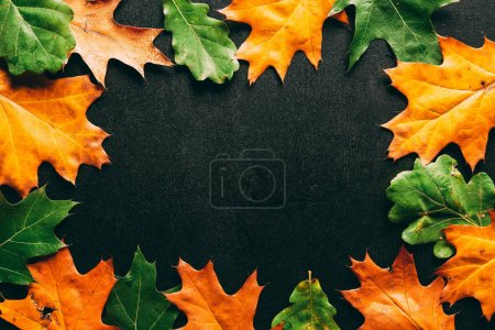 full frame of arranged oak leaves on black tabletop