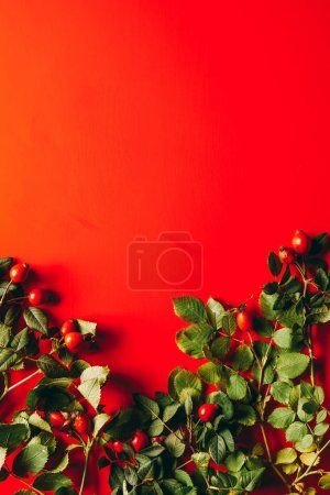 flat lay with briar and green leaves on red background