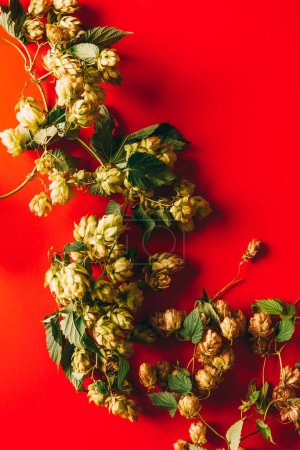 top view of hops with green leaves on red backdrop