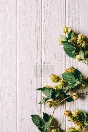 Photo pour Vue de dessus des branches de houblon avec des feuilles vertes sur la surface blanche en bois - image libre de droit