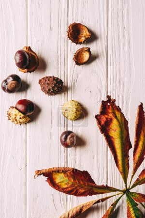 flat lay with chestnuts and dry leaves on white wooden tabletop