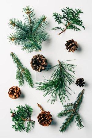 Photo pour Lay plat avec des branches vertes et pommes de pin disposées sur fond blanc - image libre de droit