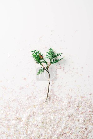 top view of pine tree branch and confetti on white background