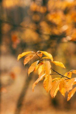 Foto de Follaje de otoño naranja sobre fondo borroso - Imagen libre de derechos