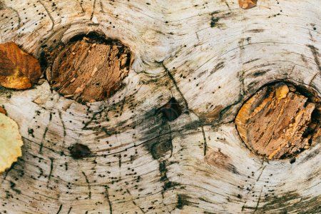 Photo for Close up view of aged cracked brown tree bark - Royalty Free Image